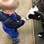 Logan feeding goats