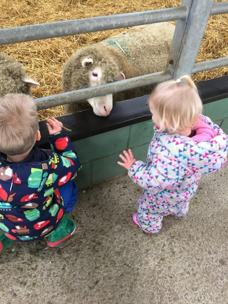 bocketts farm feeding the animals
