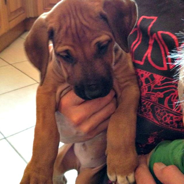 Florence at about 6 weeks old when we first met her at the breeders