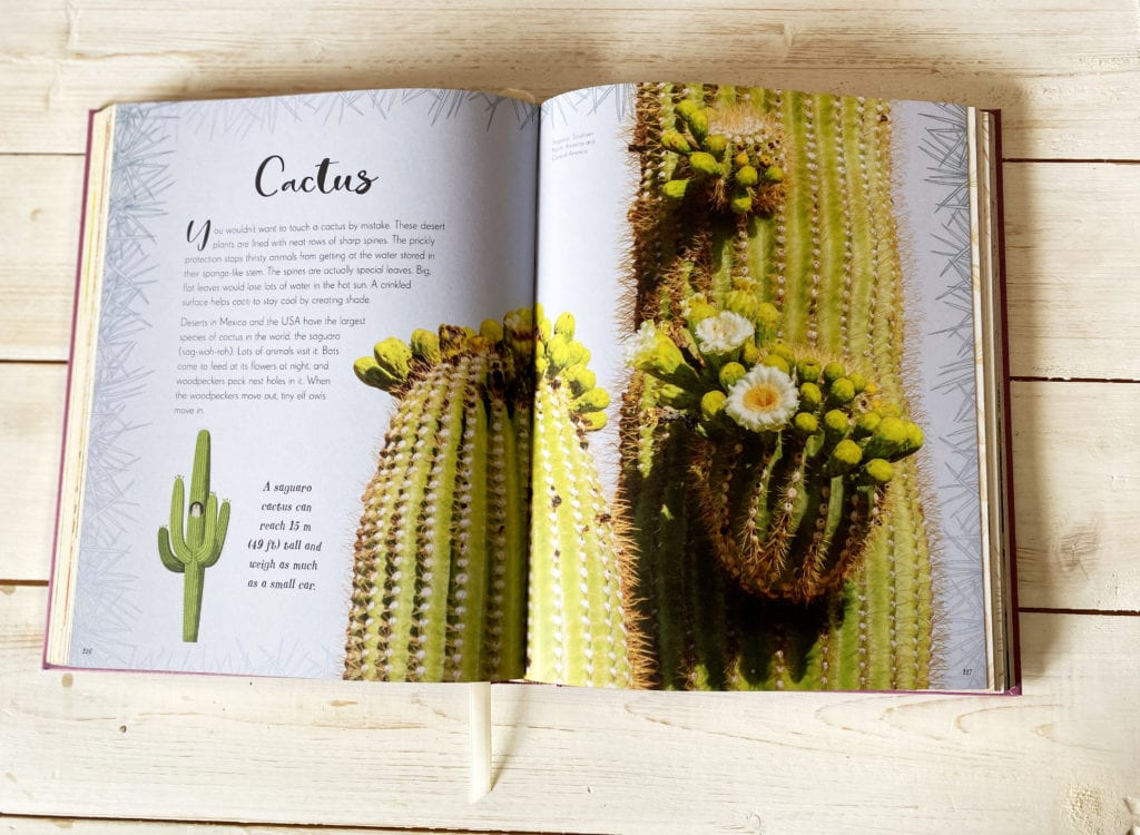 Inside pages of The Wonders of Nature - cactus