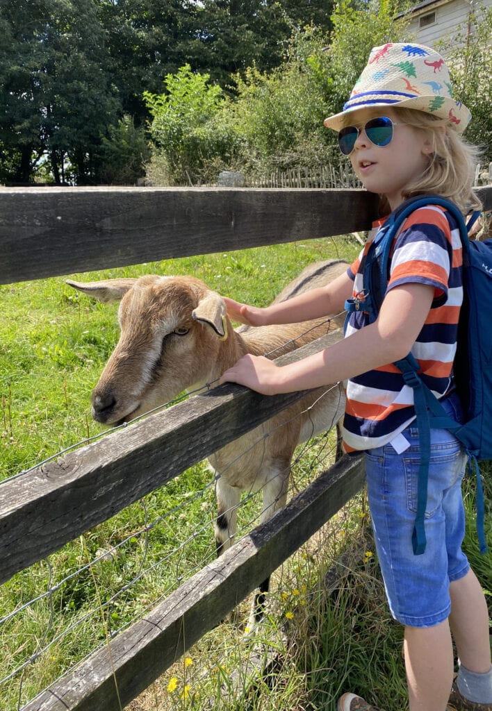 Logan in a hat and sunglasses stroking a goat through a fence
