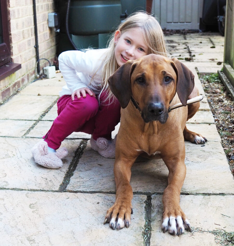 Picture of a Rhodesian Ridgeback lying on a patio girl with a young blonde girl cuddling her wearing pink jeans