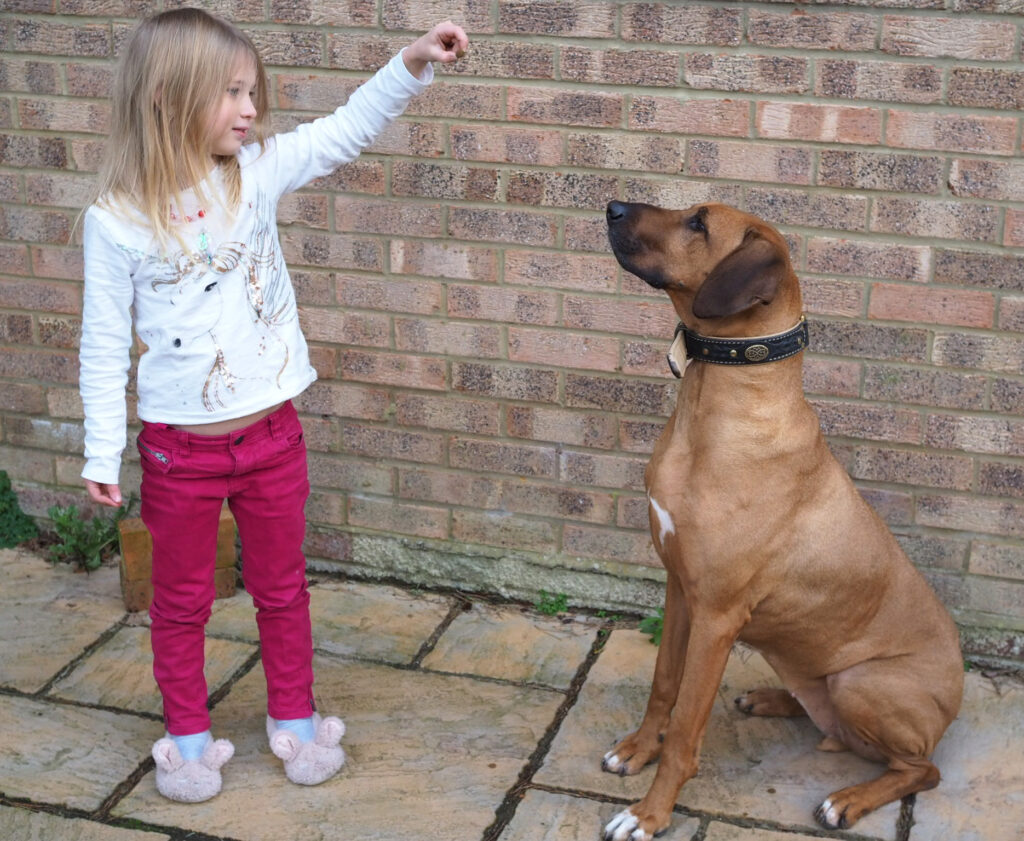 What should you feed your dog? Image of a rhodeisan ridgeback sat down with a young blonde girl holding a treat for her