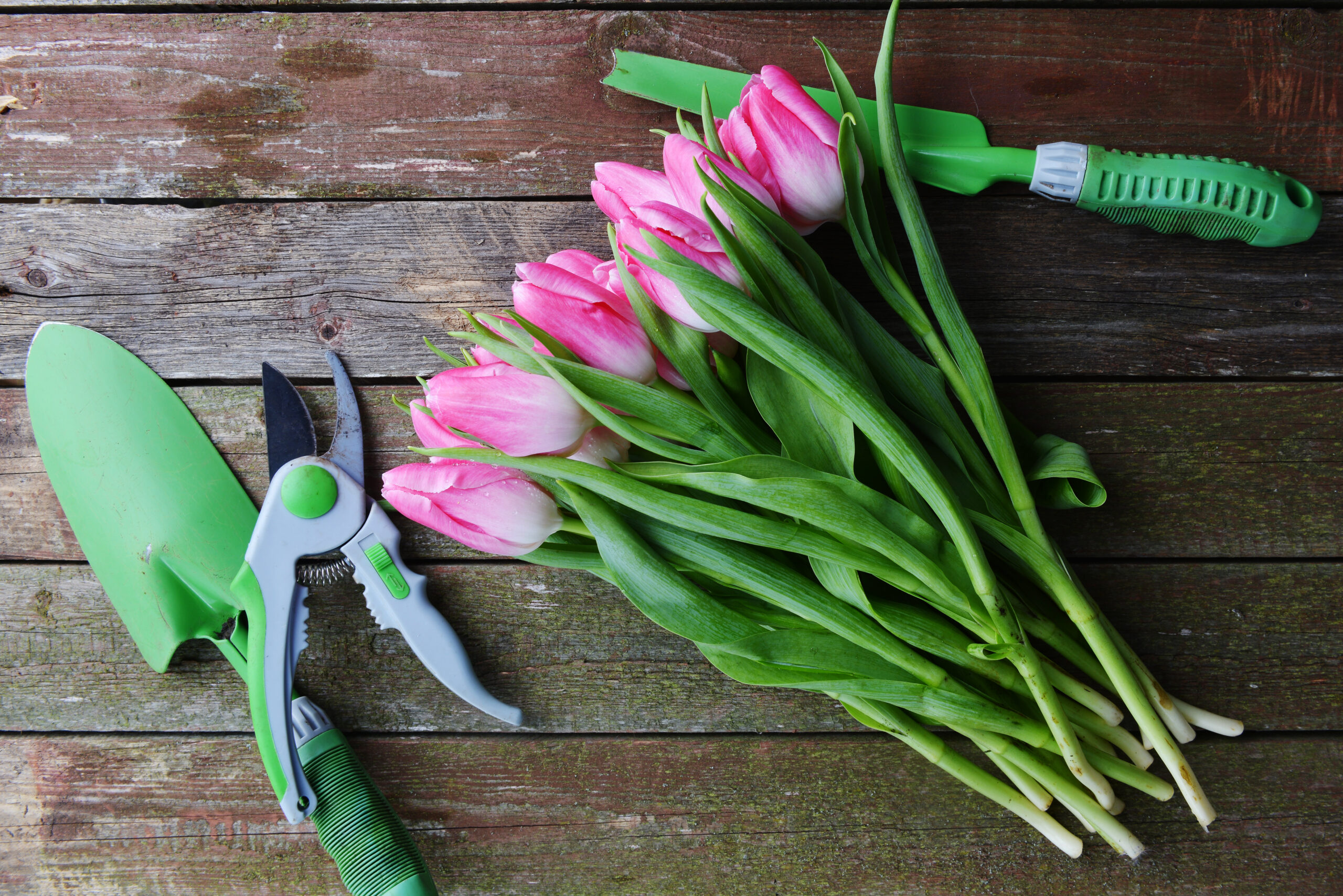 Adding Gorgeous Colour to your Garden with Dutch Tulips