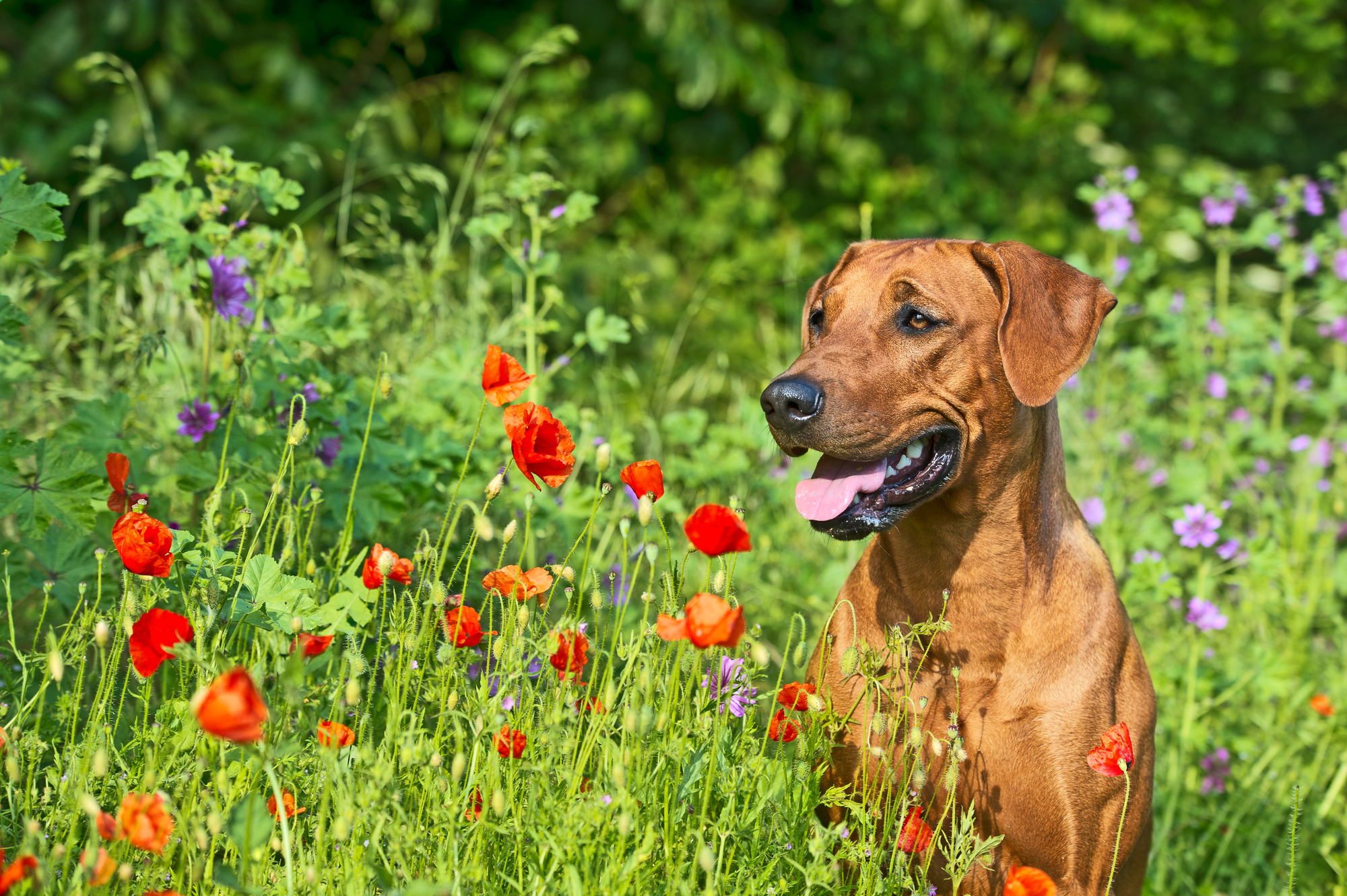 Helping Your Dog Beat the Heat this Summer